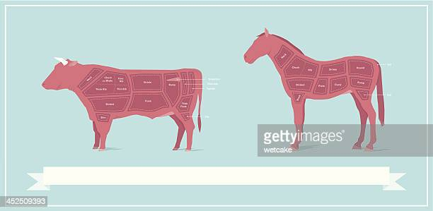 horse fleisch & rindfleisch vergleich diagramm - gliedmaßen körperteile stock-grafiken, -clipart, -cartoons und -symbole
