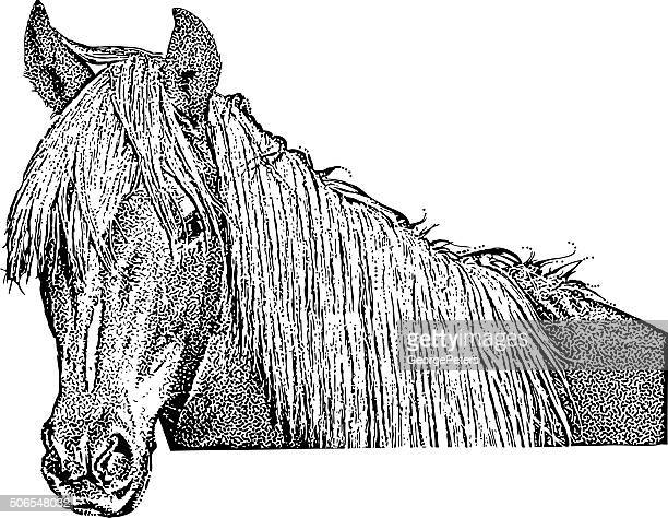 horse portrait isolated on white background - horse family stock illustrations, clip art, cartoons, & icons