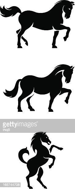 horse set - stallion stock illustrations, clip art, cartoons, & icons