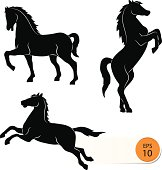 Horse silhouette on a white background - Vector