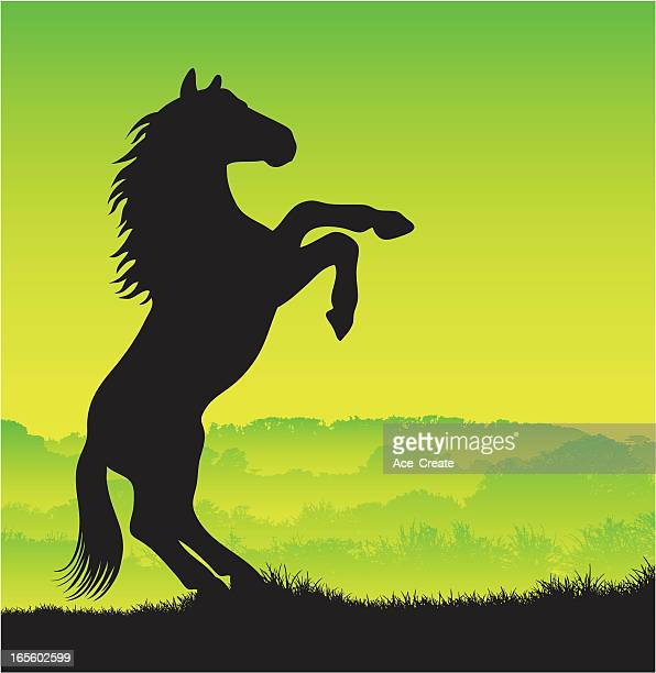 horse silhouette rearing up - stallion stock illustrations, clip art, cartoons, & icons