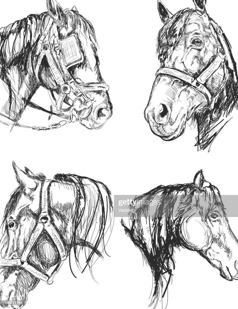 Horse Sketch High Res Vector Graphic Getty Images