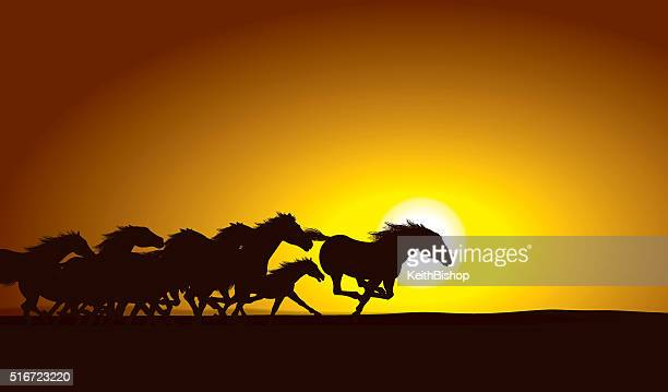 horse stampede sunset background - mustang wild horse stock illustrations, clip art, cartoons, & icons