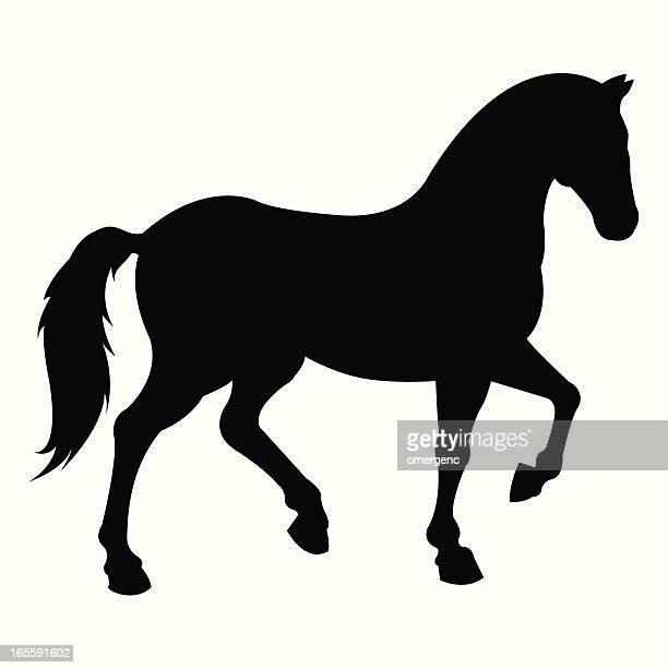 ilustraciones, imágenes clip art, dibujos animados e iconos de stock de caballo - caballo familia del caballo