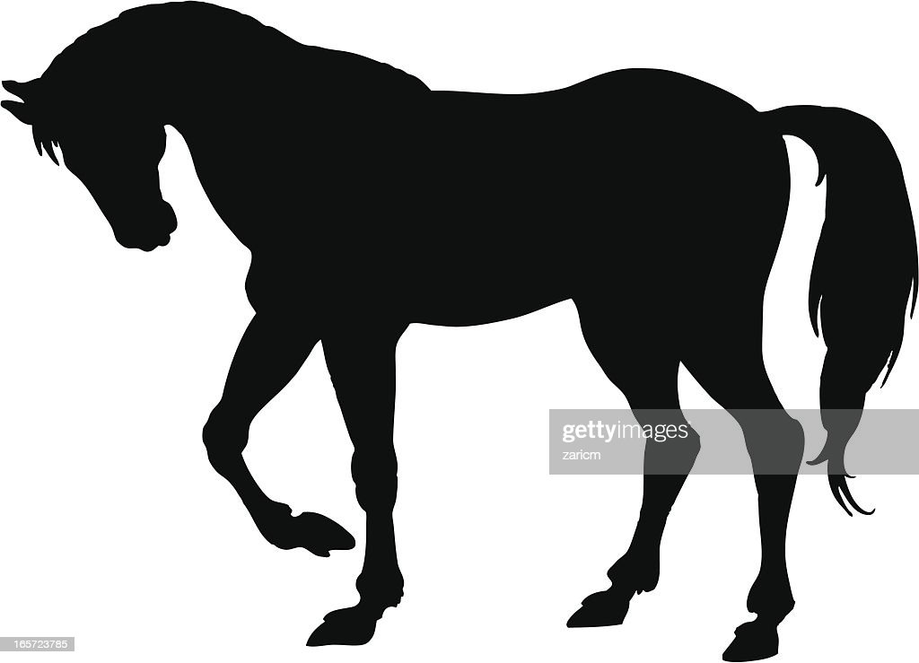 horse vector art and graphics getty images rh gettyimages com horse vector design horse vector design