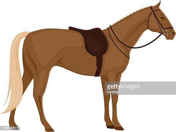 Horse with Saddle