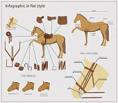 Horse with various gear and details infographic in flat style