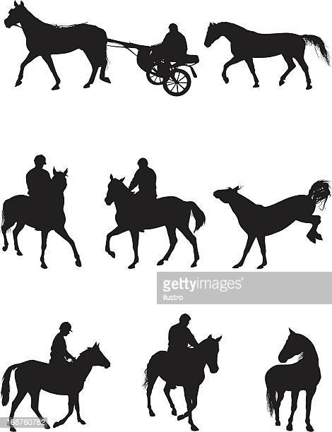 horses and riding - paddock stock illustrations, clip art, cartoons, & icons