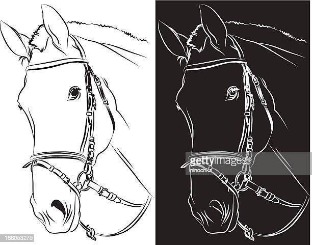 horse's head - mare stock illustrations, clip art, cartoons, & icons