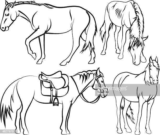 horse's sketches - paddock stock illustrations, clip art, cartoons, & icons