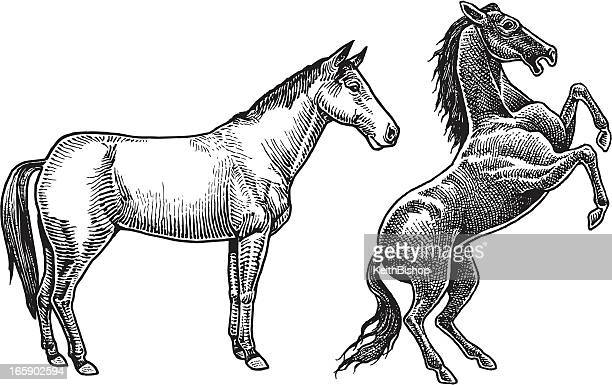 horses - stallions - mustang wild horse stock illustrations, clip art, cartoons, & icons