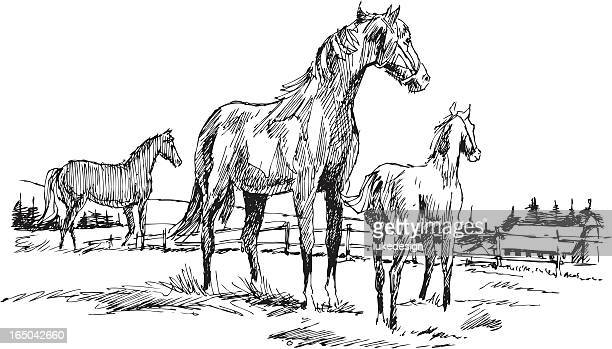 horses - mare stock illustrations, clip art, cartoons, & icons