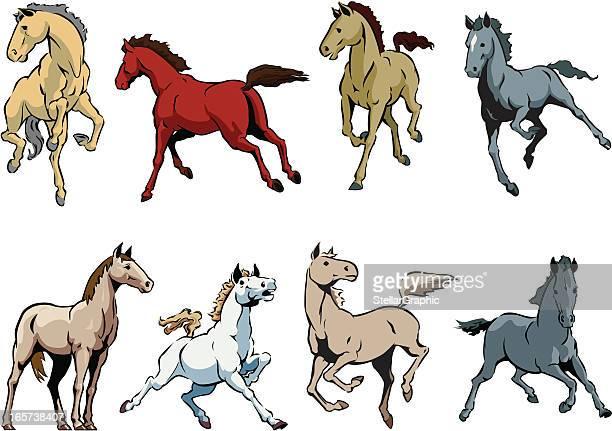 horses - animal mane stock illustrations