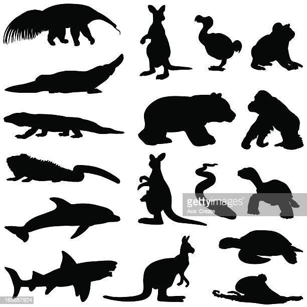 ilustraciones, imágenes clip art, dibujos animados e iconos de stock de clima cálido siluetas de animales - iguana