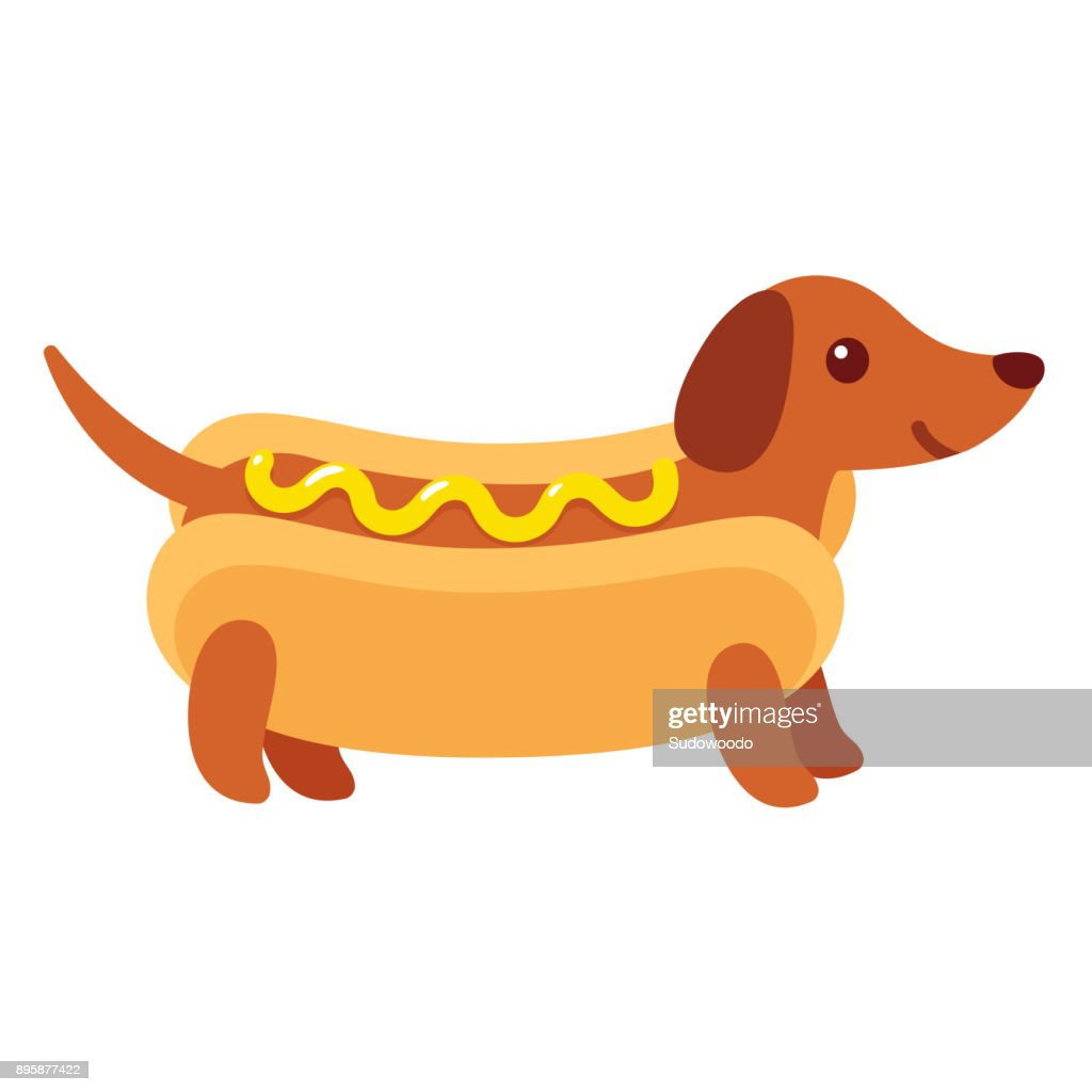 Hot dog dachshund puppy