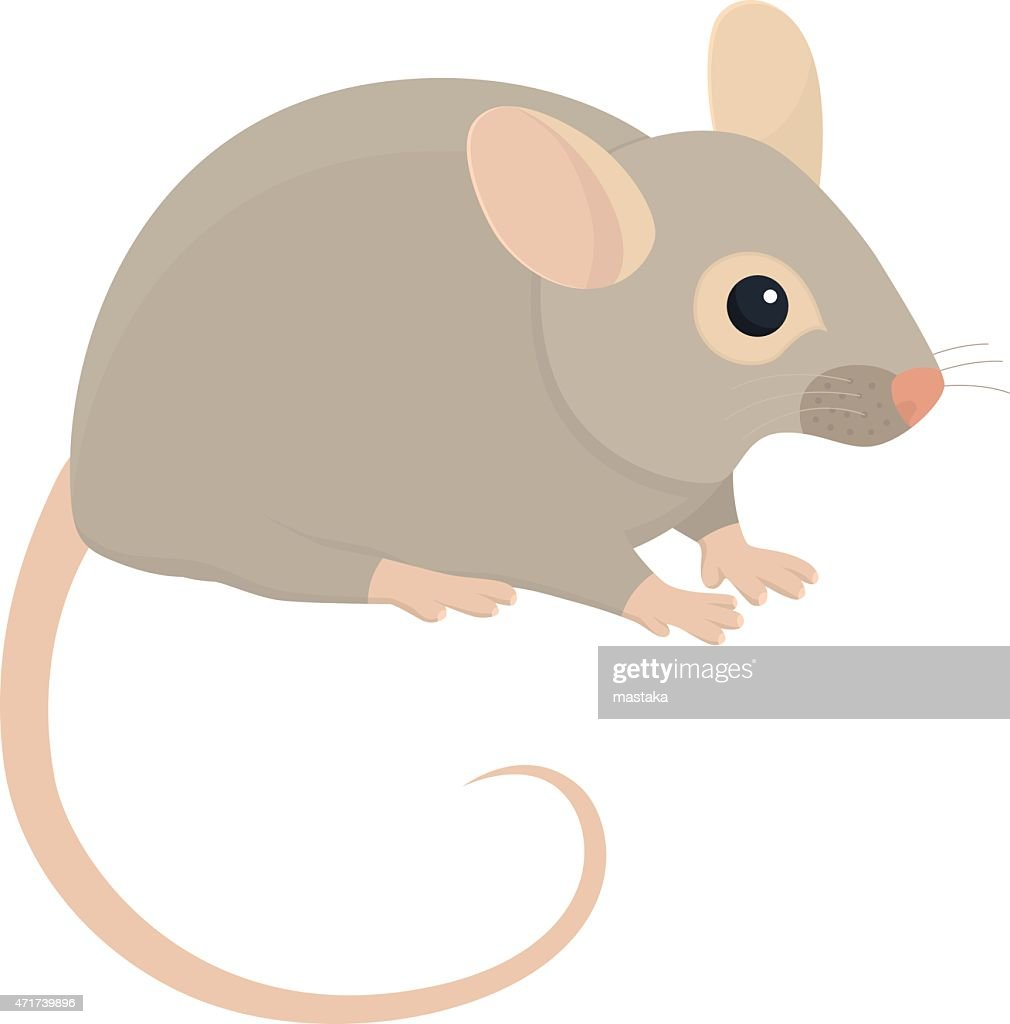 House mouse illustration on white background