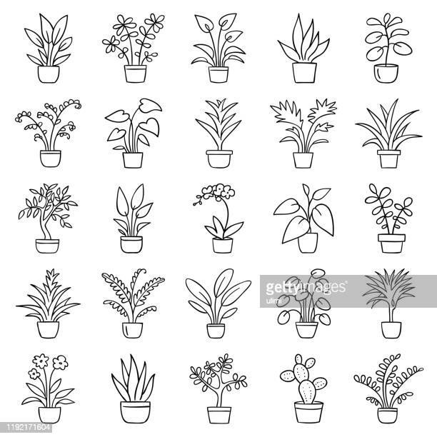 stockillustraties, clipart, cartoons en iconen met huis planten - bloem plant