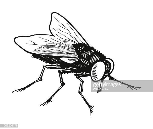 housefly - insect stock illustrations