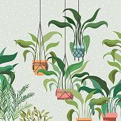 houseplants in macrame hangers garden scene