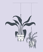 houseplants in macrame hangers