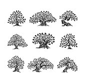 Huge and sacred oak tree silhouette icon isolated on white background.