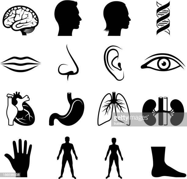 human anatomy and senses black & white vector icon set - sensory perception stock illustrations
