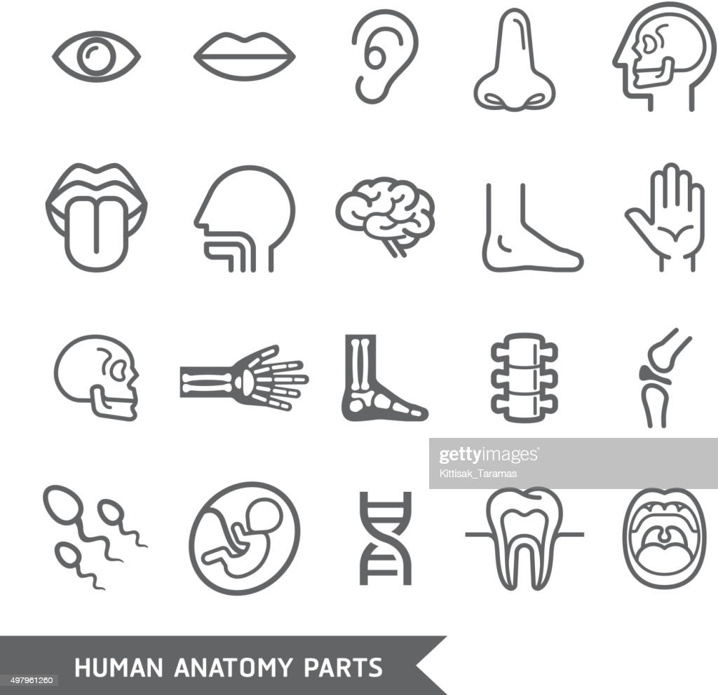 Human anatomy body parts detailed icons set.