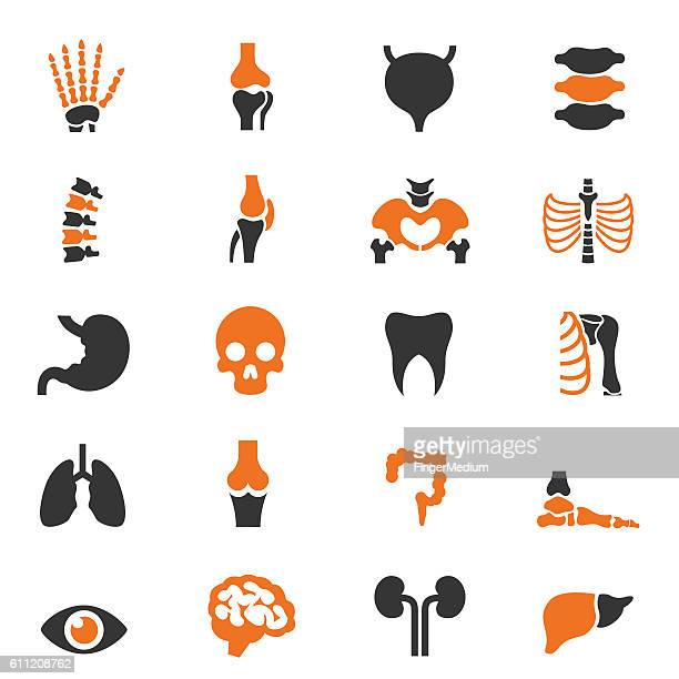 Human anatomy icon set