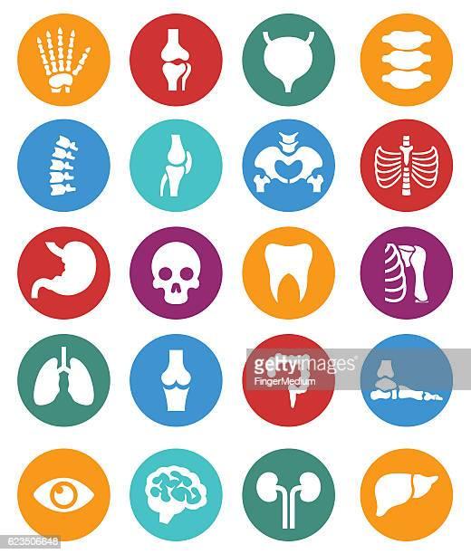 human anatomy icon set - digestive stock illustrations