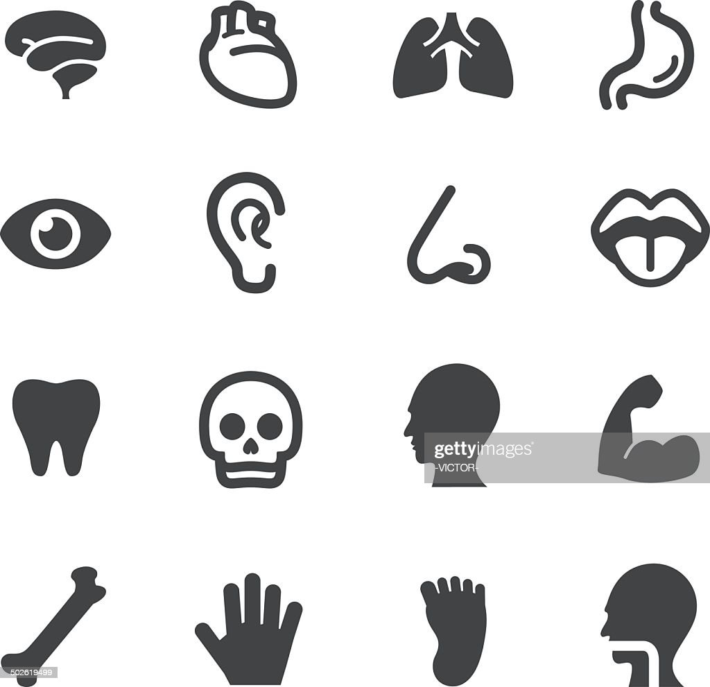 Human Anatomy Icons - Acme Series