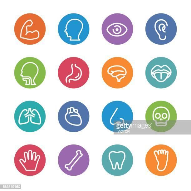 ilustrações de stock, clip art, desenhos animados e ícones de human anatomy icons - circle line series - sistema nervoso central
