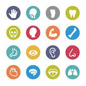 Human Anatomy Icons - Circle Series