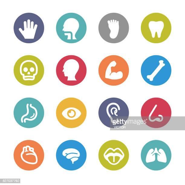 human anatomy icons - circle series - sensory perception stock illustrations