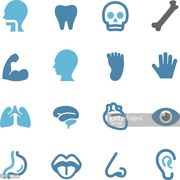 human anatomy icons - conc series - sensory perception stock illustrations