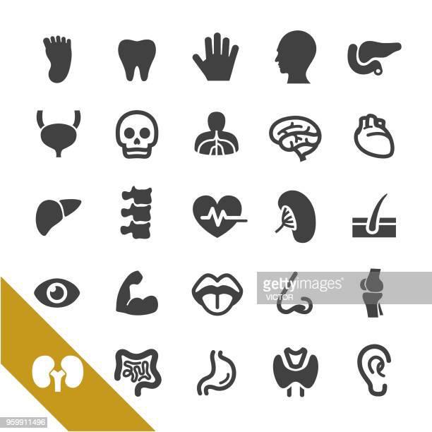 illustrations, cliparts, dessins animés et icônes de anatomie humaine icons - série select - chirurgie esthetique