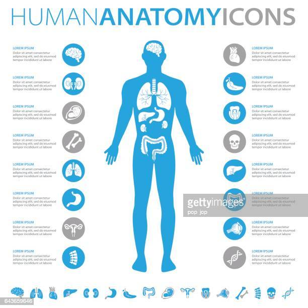 human anatomy icons - human body part stock illustrations