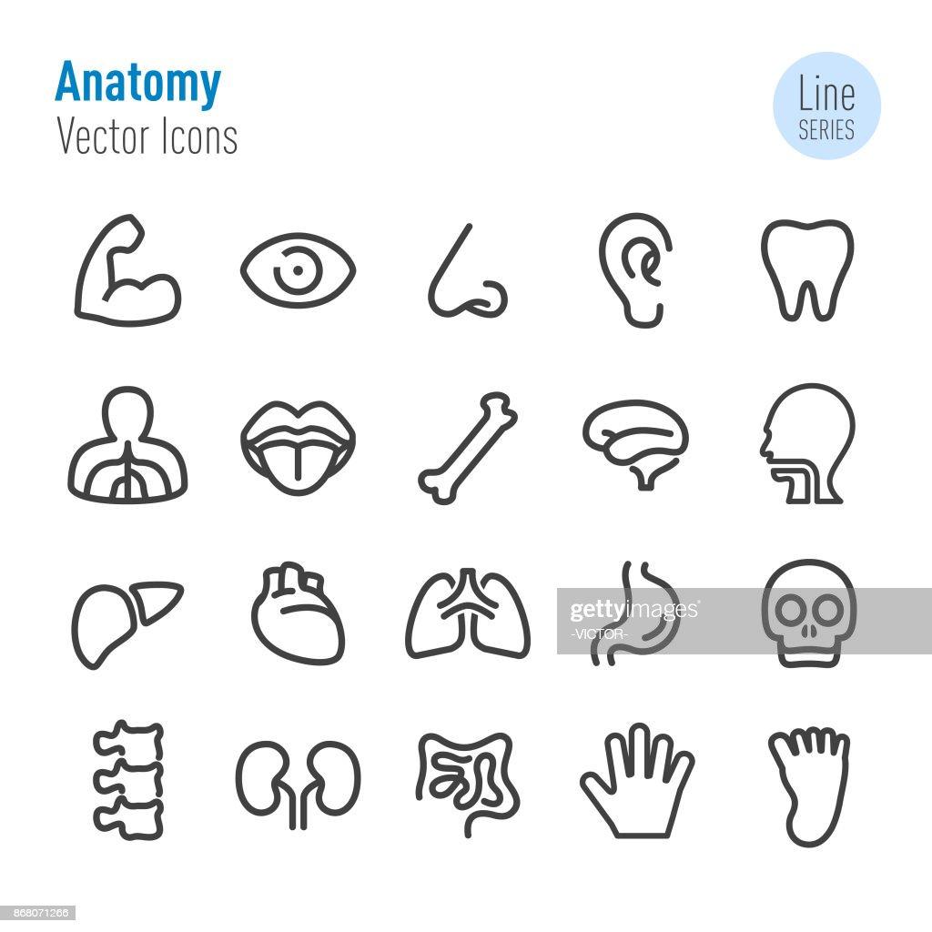 Human Anatomy Icons - Vector Line Series : stock illustration