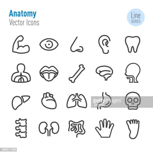 human anatomy icons - vector line series - heart symbol stock illustrations