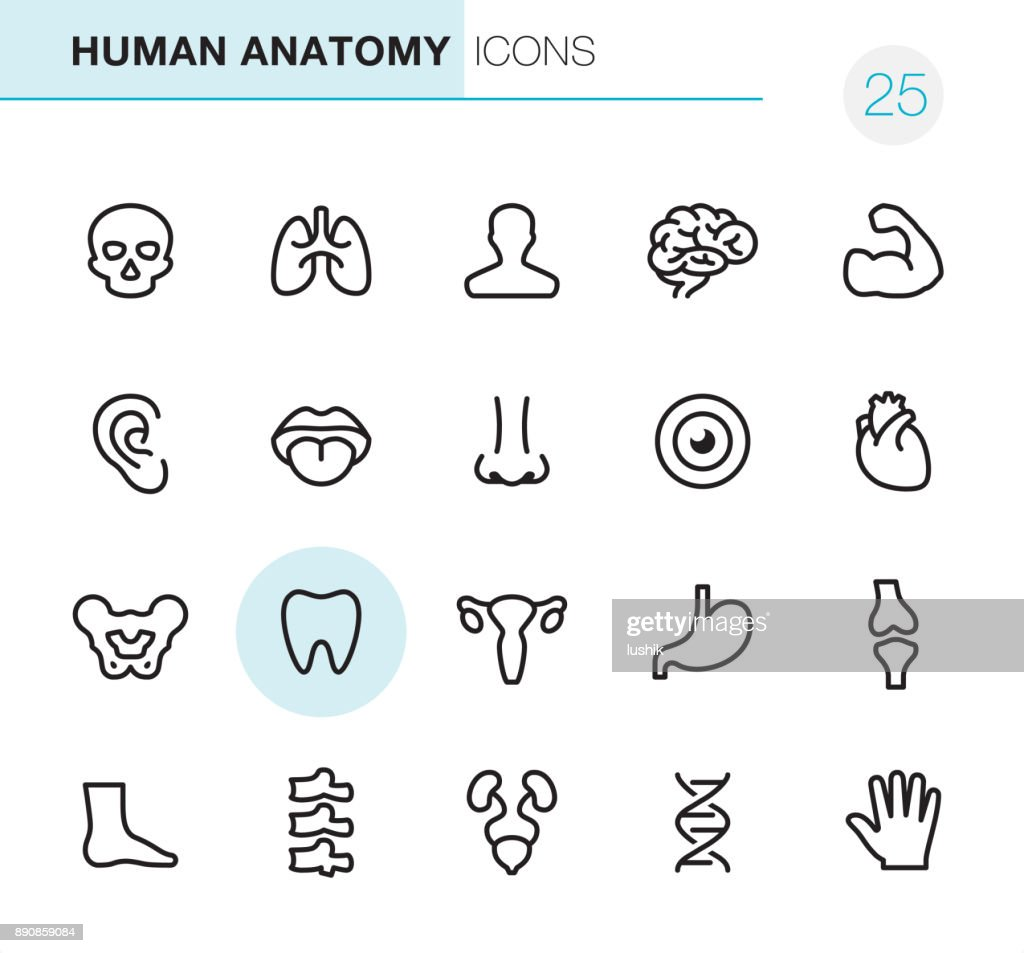 Human Anatomy - Pixel Perfect icons : stock illustration