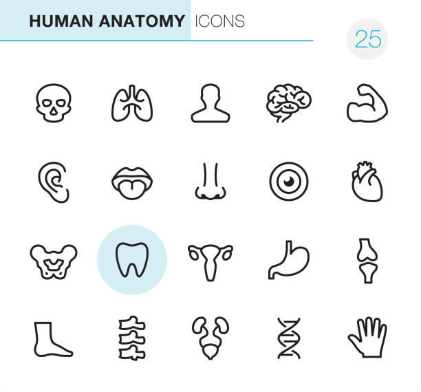 human anatomy - pixel perfect icons - human body part stock illustrations