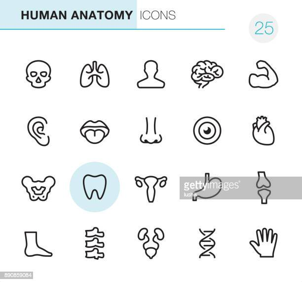 human anatomy - pixel perfect icons - the human body stock illustrations