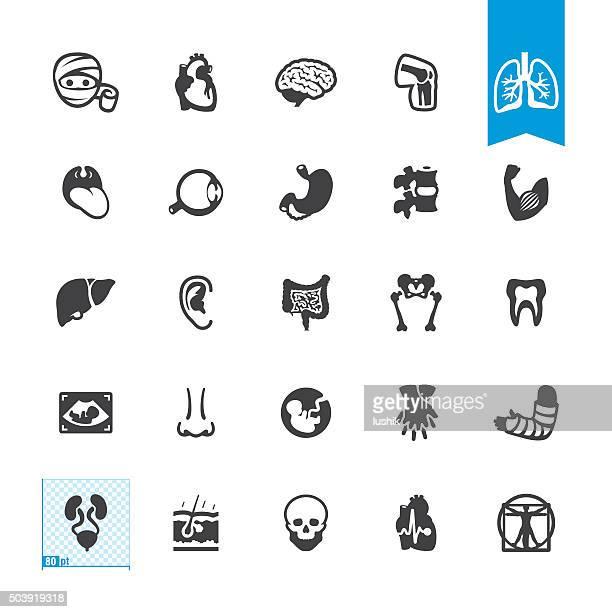 ilustraciones, imágenes clip art, dibujos animados e iconos de stock de vector iconos de la anatomía humana con - músculo humano