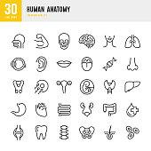 Human Anatomy - set of line vector icons