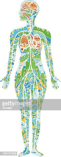 human anatomy - respiratory system stock illustrations, clip art, cartoons, & icons