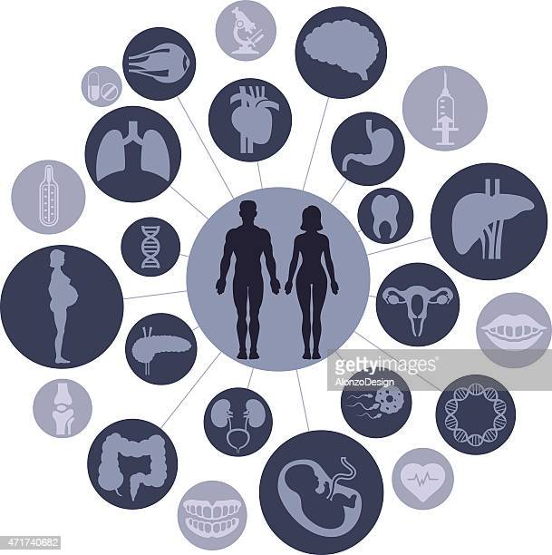 human anatomy - pancreas stock illustrations, clip art, cartoons, & icons