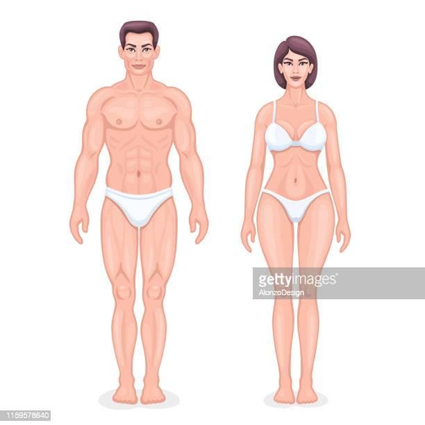illustrazioni stock, clip art, cartoni animati e icone di tendenza di human anatomy vector - oggetti femminili