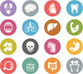 Human Anatomy / Wheelico icons