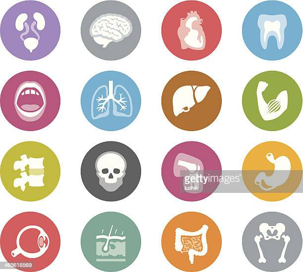 human anatomy / wheelico icons - human body part stock illustrations