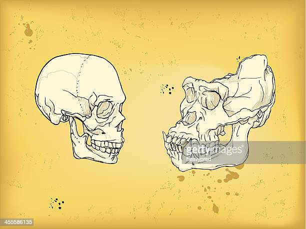 Mastoid Bone Stock Illustrations And Cartoons | Getty Images