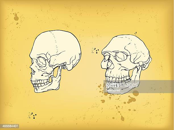 Human and neanderthal skull